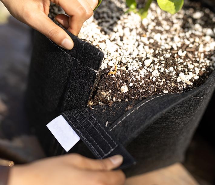The Velcro Seam of the GeoPot Fabric Transplanter Pot helps make transplanting easy
