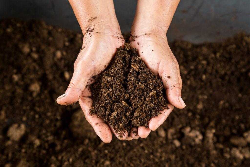 hands holding rich dirt